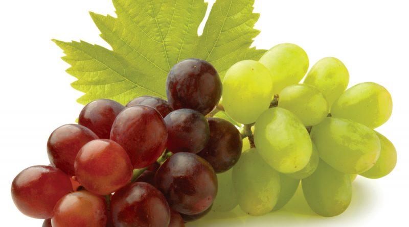 grozde, plodove