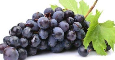 grozde cherno plodove